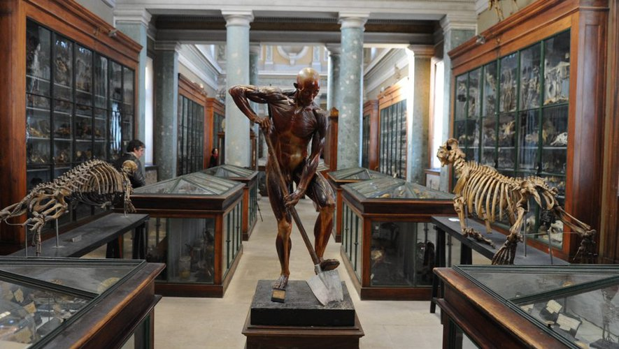 Museu de Anatomia